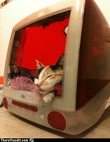 Mac OS: House Cat