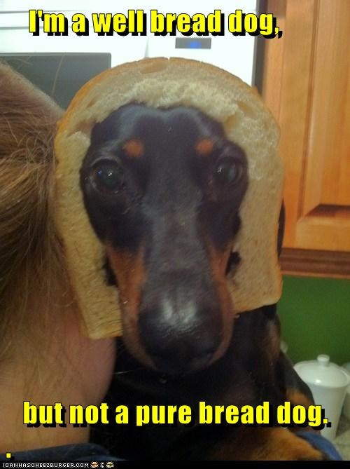 Does the Bread of a Goggie Really Matter?