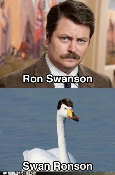 mustache,Nick Offerman,parks and recreation,photoshop,puns,ron swanson,swan,swans