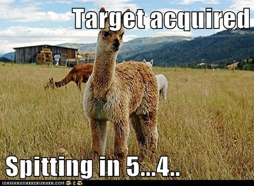countdown,llama,pet,spitting,target acquired