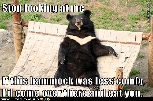 bears,comfy,hammok,lazy,looking,lucky,stop