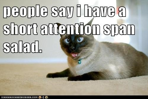 Lolcats: people say i have