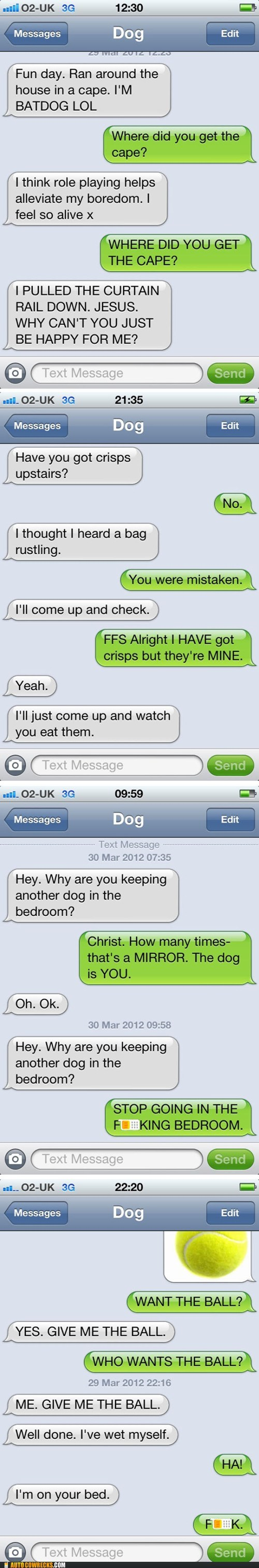 Autocowrecks: If Dogs Could Text