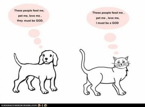 An Oldie But a Goodie: Cats vs. Dogs
