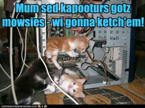 Mum sed kapooturs gotz mowsies - wi gonna ketch'em!