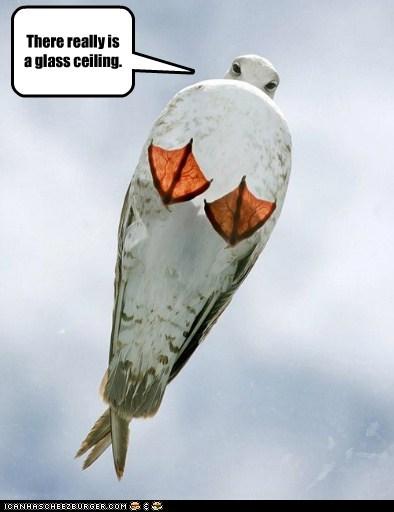 bird,glass ceiling,photographer,seagull,sexism,standing,under