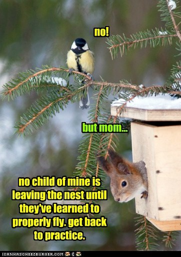 cant-fly,confused,flying,leaving,mom,nest,no,squirrel,switched at birth
