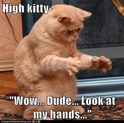 "High kitty-  ""Wow... Dude... Look at my hands..."""