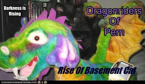 Rise Of Basement Cat