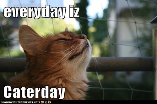 everyday iz  Caterday