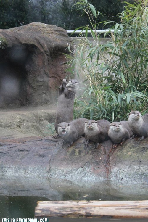 Animal Bomb,animals,lol,otter,otters