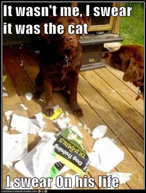It wasn't me, I swear it was the cat   I swear On his life