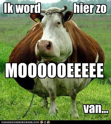Yes, cows speek dutch...deal wiff it!