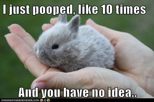 Bunday,bunny,mischief,no idea,pooped
