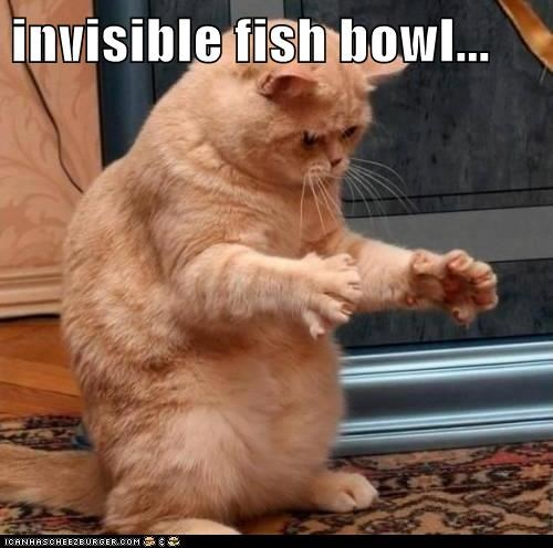 invisible fish bowl...