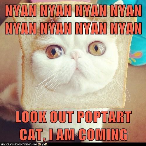 NYAN NYAN NYAN NYAN NYAN NYAN NYAN NYAN  LOOK OUT POPTART CAT, I AM COMING