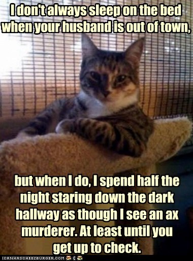 The Most Interesting Cat in the World: Oops, False Alarm