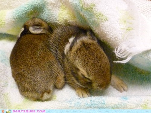 Reader Squees: Baby Bunnies
