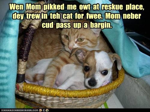 bargain,basket,cat,dogs