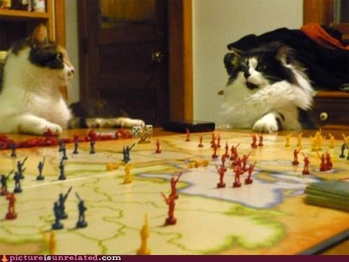 best of week,board games,Cats,risk,wtf