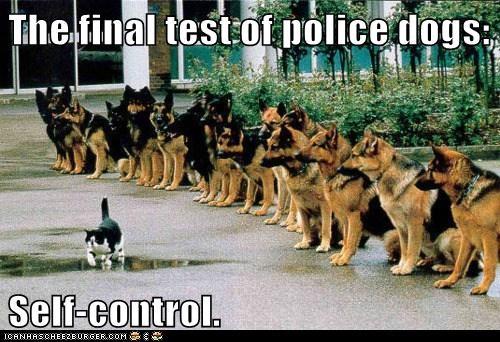 cat,dogs,German Shepard