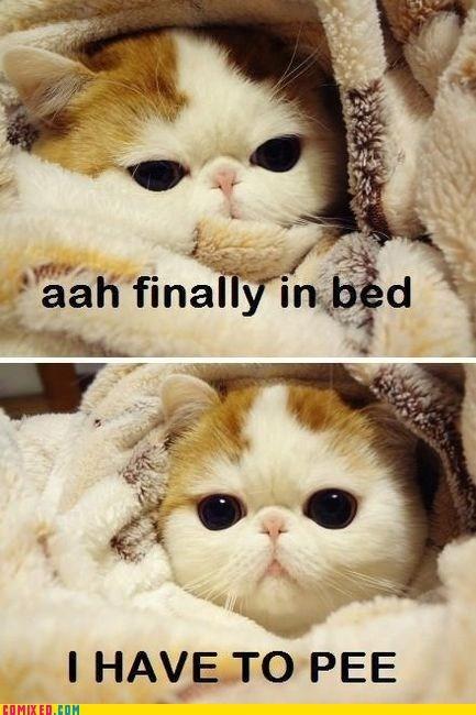 animals,best of week,cat,pee,that feel