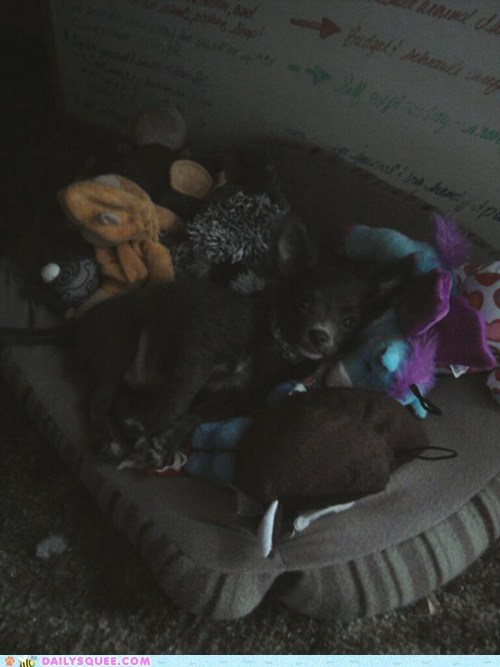 bed,dogs,pet,puppy,reader squees,toys