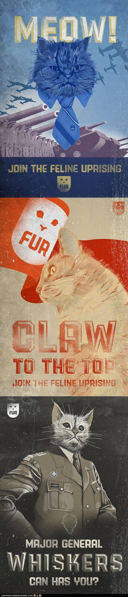 The Feline Takeover Begins