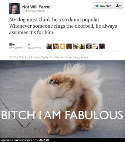 actors,comedians,dogs,doorbell,fabulous,tweets,twitter,Will Ferrell