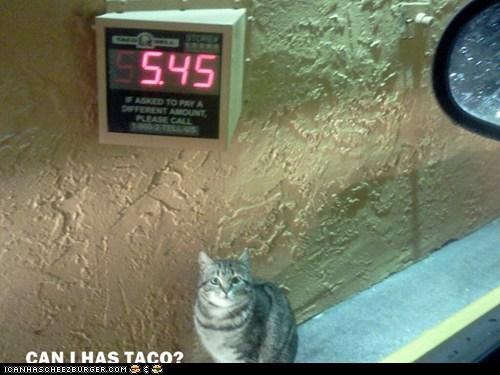 Can I Has Taco?