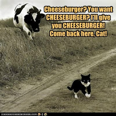 angry,Cats,chasing,cheeseburger,come back here,cows