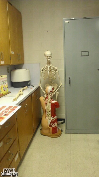 anatomy,school,sexy times,skeleton,skull,Things That Are Doing It