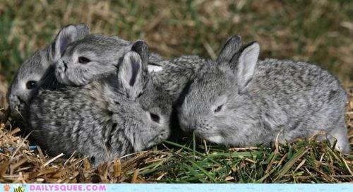 Babies,bunnies,grass,grey,pockets