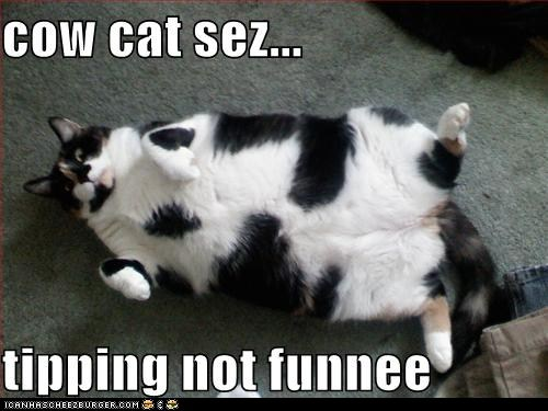 cat,classic,classics,cow,FAIL,fall,fat,lolcat,tip