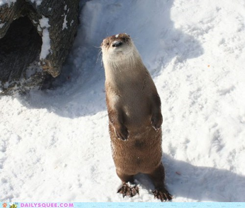 otter,river otter,snow,squee spree,stand