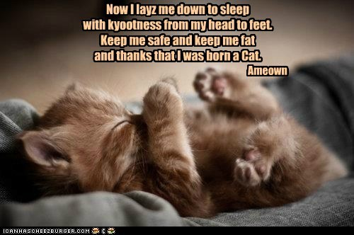 Now I layz me down to sleep with kyootness from my head to feet. Keep me safe and keep me fat and thanks that I was born a Cat.