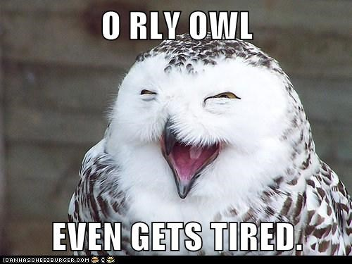 O RLY OWL  EVEN GETS TIRED.
