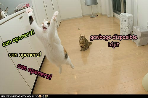 can opener,cat,hear,kitchen,lolcat,sound,wrong