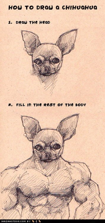 Chihuahua Body Builder