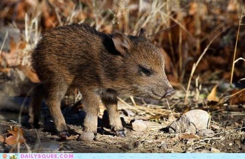 Scraggly Piglet