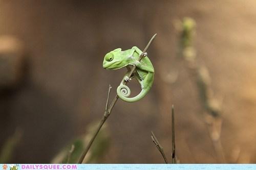branch,chameleon,lizard,stick