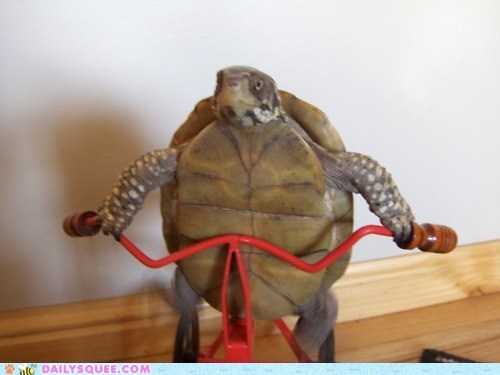 bike,exercise,toy,turtle