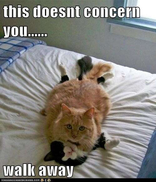 Lolcats: this doesnt concern you...