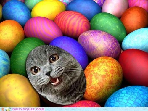 contest,easter,easter egg hunt,ichc