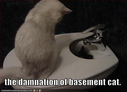 the damnation of basement cat.