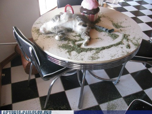 Crunk Critters: OD On the Catnip