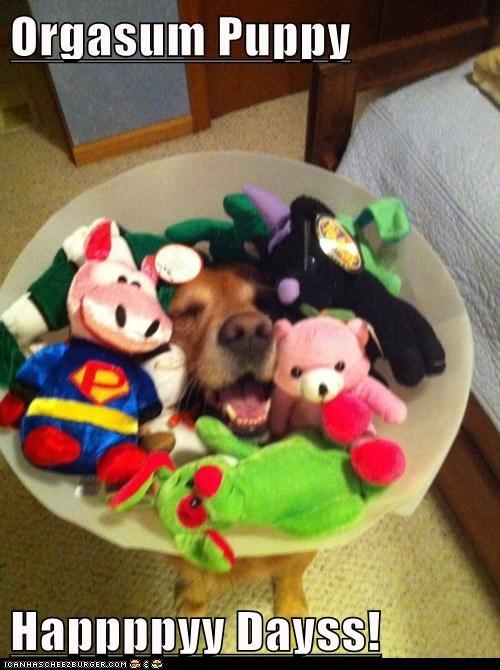 Orgasum Puppy  Happppyy Dayss!