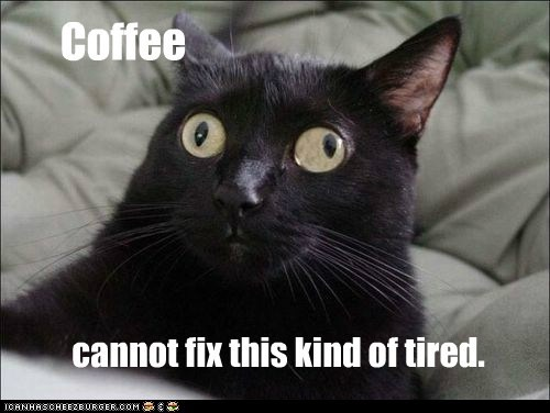 Lolcats: Coffee is good.  Sleep is better