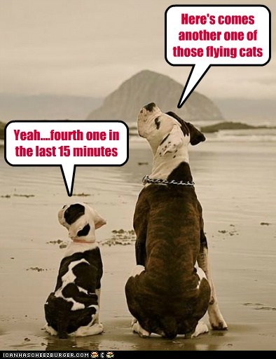 Be On The Look-Out For Flying Cats
