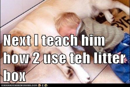 Next I teach him how 2 use teh litter box